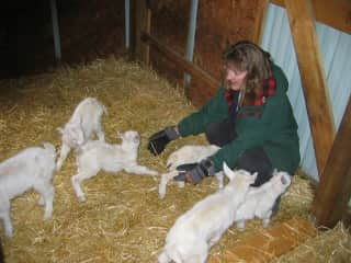Deb with a lot of the newborn goats