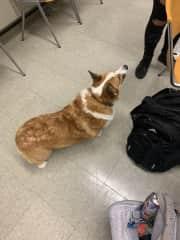 Einstein, my favorite theater dog