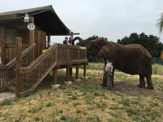 Monterey - Breakfast with the elephants