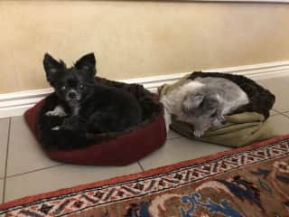 lil ones in their beds