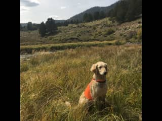 Stella being safe during hunting season