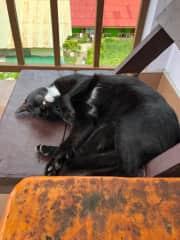 Chocolina takin a nap while Maru is working