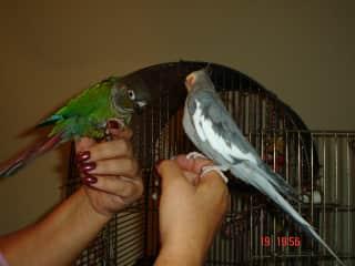2 of my rescue birds