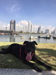 Maimie enjoying the Cinta Costera in Panama