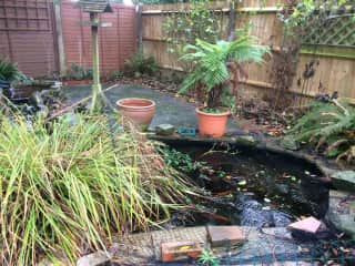Home to frogs, about 10 large goldfish and golden orfe .......sometimes herons visit
