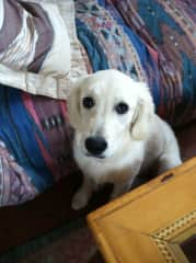 Marjory - dog sit