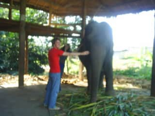 In Thailand with elephant, 2008