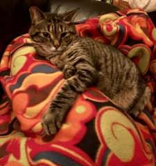 Kuma will keep you company as you watch TV.