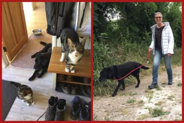 Ted walks and Bella and Alfie cats