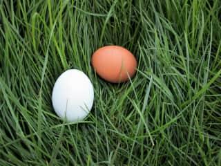 Perfect eggs!