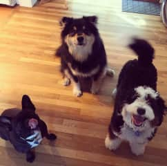 Chloe and her fur buddies