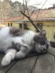 Abla (my cat)