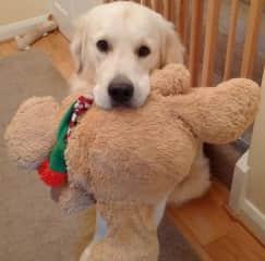 Toby & Friend