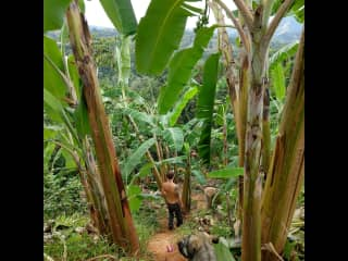 I love tropical farming!