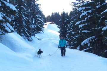 One of my favorite after ski activity... a walk with Bamby, my friends border collie, in the French Alps