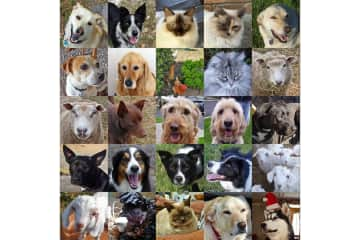 All of our pets - Australia 2017