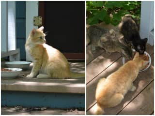 Bunny's well-loved stray studio cats that we got spayed: Kelsey, Cameron, and Nikko.