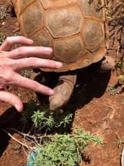 Scratching a tortoise at Best Friends