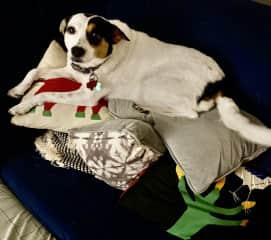 Haley loves a few pillows ...