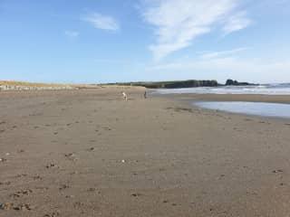 Olé and Dearg enjoying the beach.  The long sprint back to Dad.