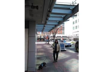 Jax and I on one of our long walks downtown Reston, Virginia, March 2019.