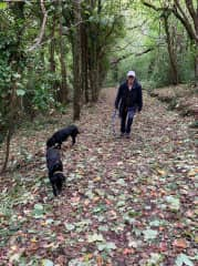 Walking with the Torquay dogs