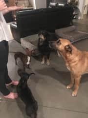 The gang... Bodhi, Delilah and Kona, Tino is no longer with us..:(