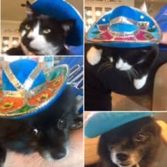 Housesit with Happy (on Cinco de Mayo). Chewy got to come along, He wasn't digging the sombrero