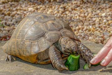 Gordon the Tortoise, we looked after in Lndon, UK