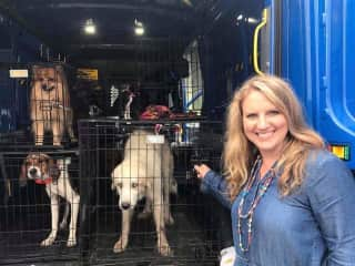 Me transporting dogs to their new homes in my rescue program