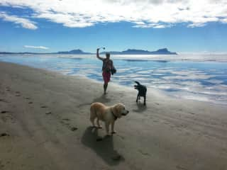 Playing ball with Philly and Jed, two dogs we looked after in Waipu, New Zealand