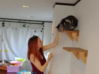 Cherry at a cat cafe in Osaka, Japan getting her kitty fix!