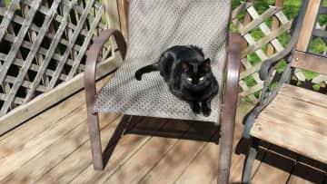 I keep an eye on outdoor cats.