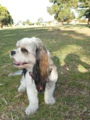 Charlie - the dog we left behind