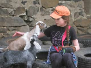 This photo shows my daughter with two of our goats when they were youngsters. I shall try to get a more current photo, but when we are in the barnyard the goats want to nuzzle. Cameras are not easy.