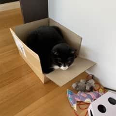 Kennie in his favourite box.