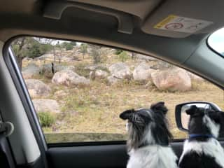 Gonzales and Bruce on our last road trip together to Tenterfield.