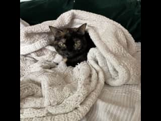 You can often find her curled up in blankets and pillows