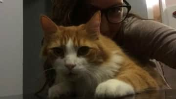 This is me with Loki the cat, who I took care of for a few week-ends.