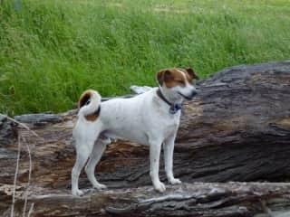 Tuck, of Wanaka, belongs to Sharyn and Kevin