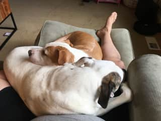 Our pups cuddled up with Brent