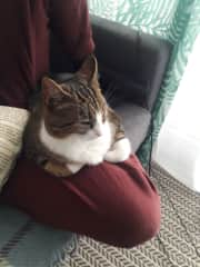 A friends cat sleeping on my husband ;)