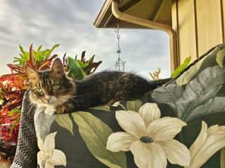 Kona, Hawaii, cat sit December 2016