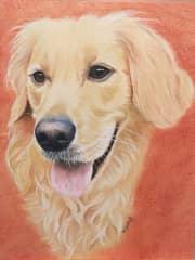 A pet portrait I drew of a friend's golden retriever.