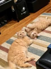 Leeloo and Fry, my 2 gingers