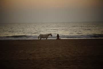 A beautiful wild horse on the beach in Goa, she came to me every day when I was meditating on the beach