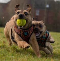 My husband and I  LOVE going on walks and I love to take my camera wherever we go:)  I especially love capturing the wonderful expressions on dogs faces when they're having fun. These two gorgeous little dogs are our son's having fun at the park.