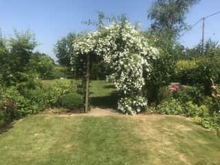 Rose arch in the garden - high summer