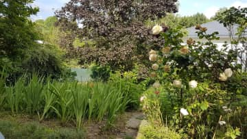 Veggie and flower garden