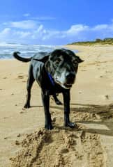Sergio at his favorite beach in Mandurah W.A
